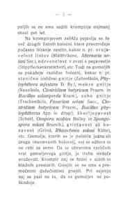 [Stran 5]
